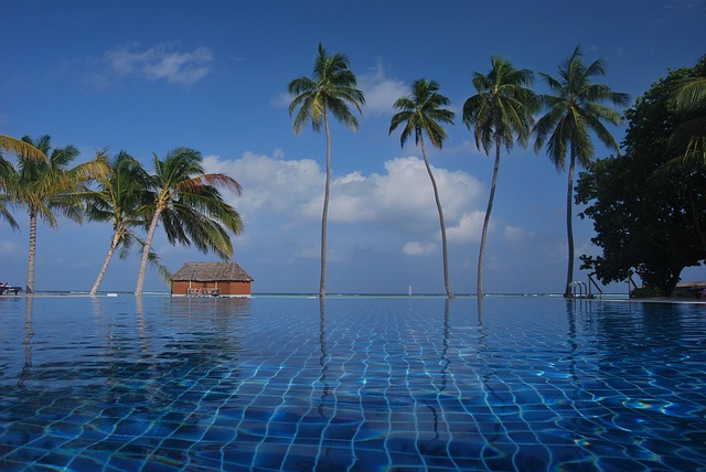 blue, exotic, island, maldives, ocean, palm trees