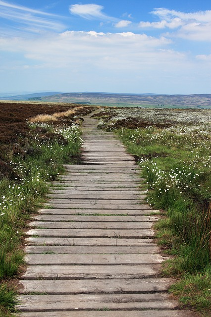 boardwalk, footpath, green, hike, hiking, landscape