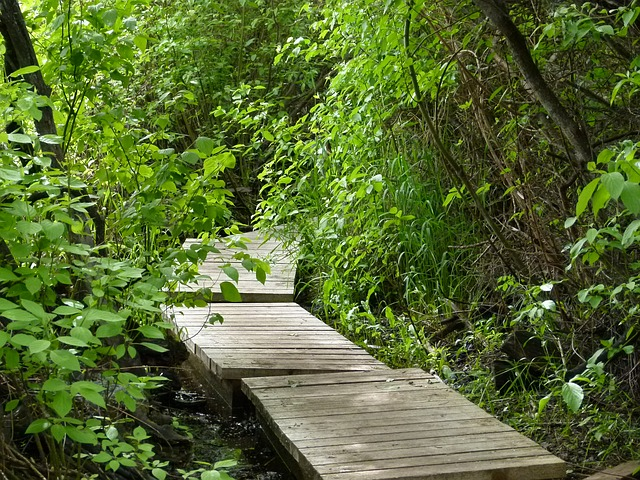 boardwalk, wooden, wetland, forest, nature, wet, humid