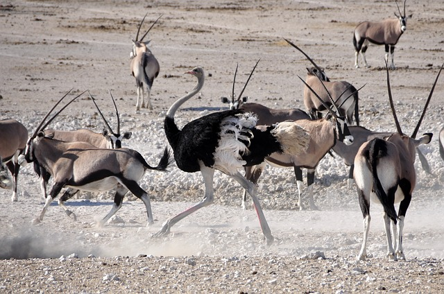 bouquet, bird, antelope, oryx, run, race, animal