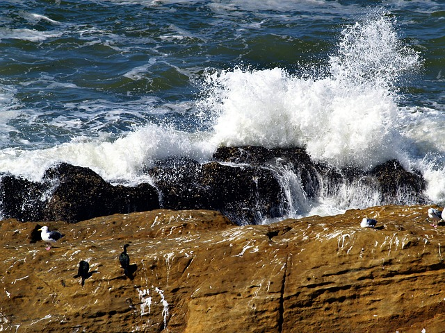 braking waves, rocks, cormorant, seagulls, sea raven