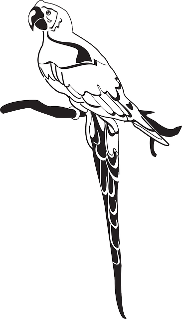 branch, wings, art, parrot, feathers, perched