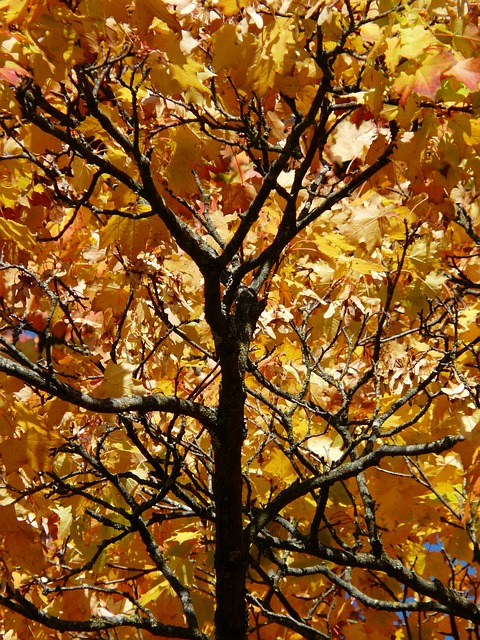 branches, aesthetic, autumn, colorful, gaudy, contrast