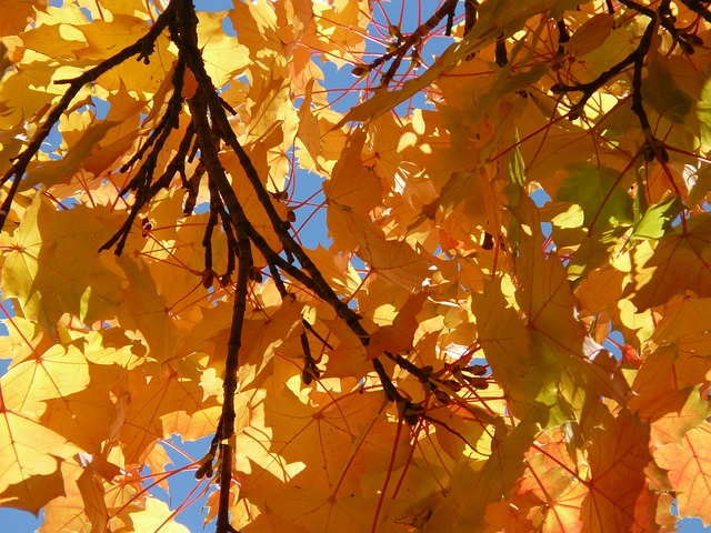 branches, branch, aesthetic, autumn, coloring, yellow
