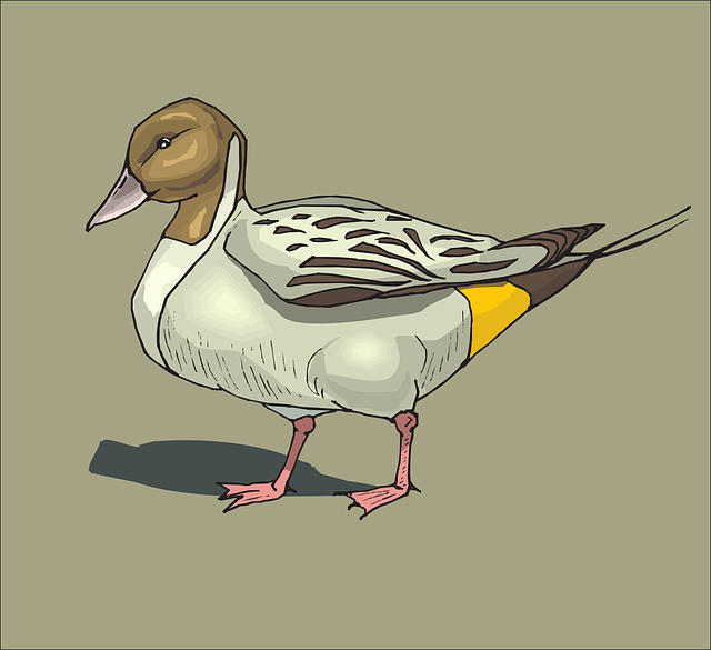 brown, bird, duck, background, wings, standing, with