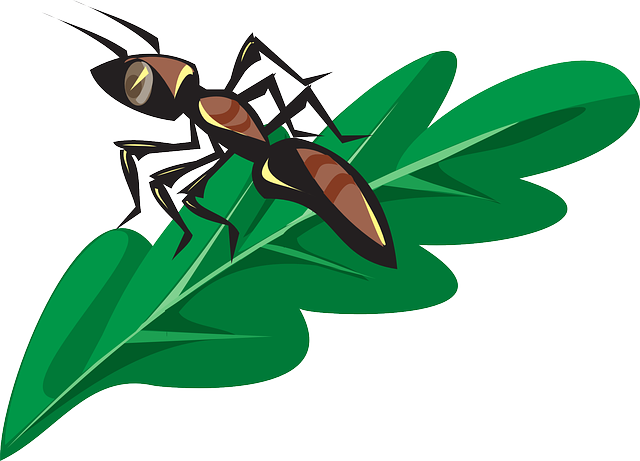 brown, leaf, cartoon, ant, plant, insect
