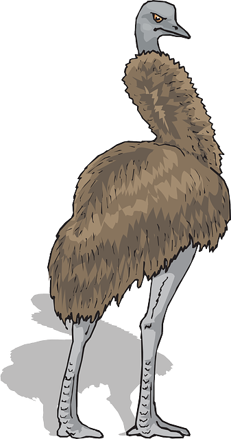 brown, shadow, bird, standing, feathers, emu