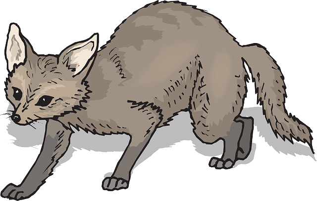 brown, shadow, fox, tail, fur, whiskers, prowling