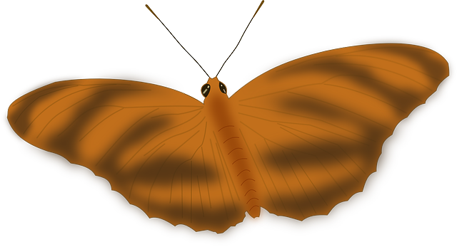 butterfly, animal, bug, insect, fly, brown