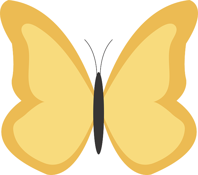 butterfly, animal, insect, bug, nature, yellow, orange