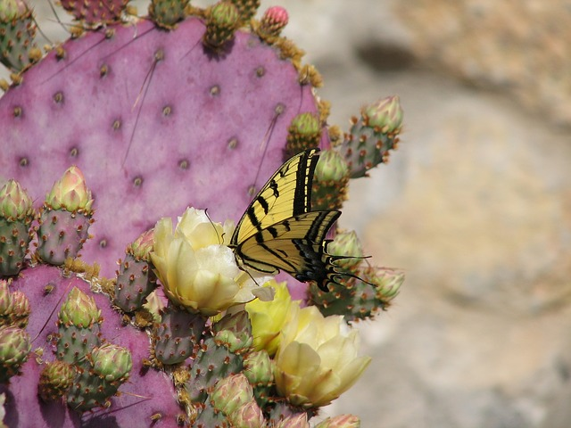 butterfly, cactus, flower, insects