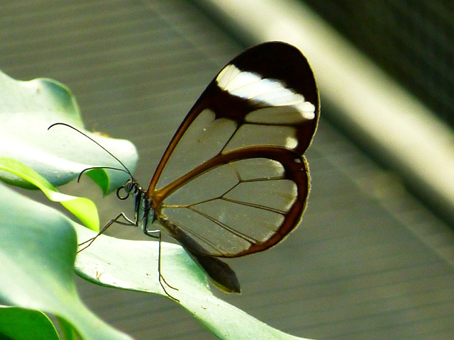 butterfly, fly, colorful, insect, tender, transparent