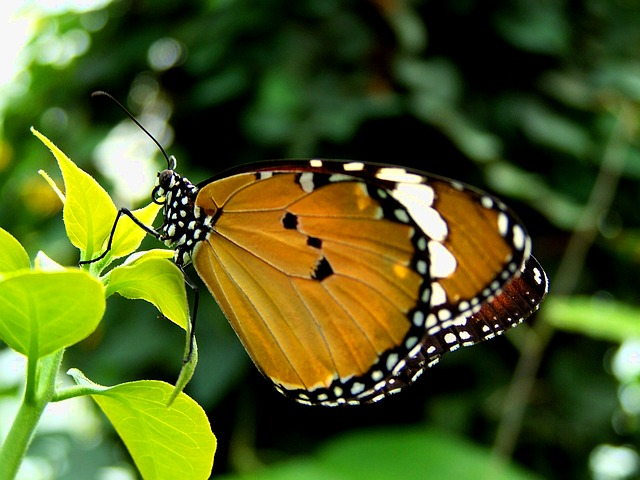 butterfly, green, summer day, green leaves, nature