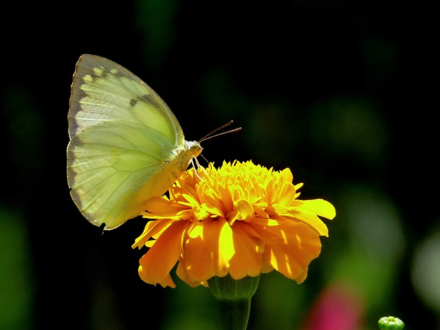 butterfly, insect, nature, outside, macro, closeup