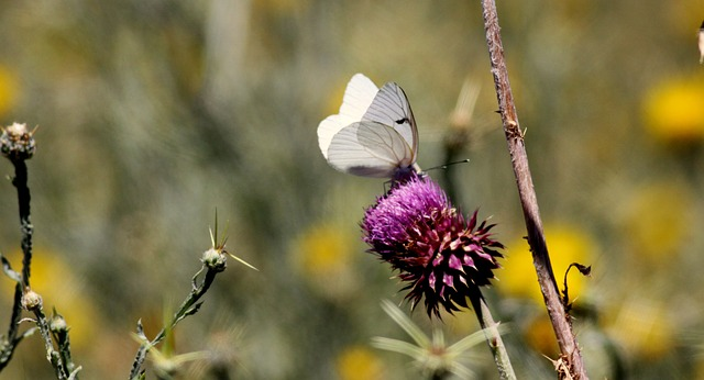 butterfly, nature