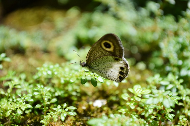 butterfly, tiny butterfly, innocent, cute, animal