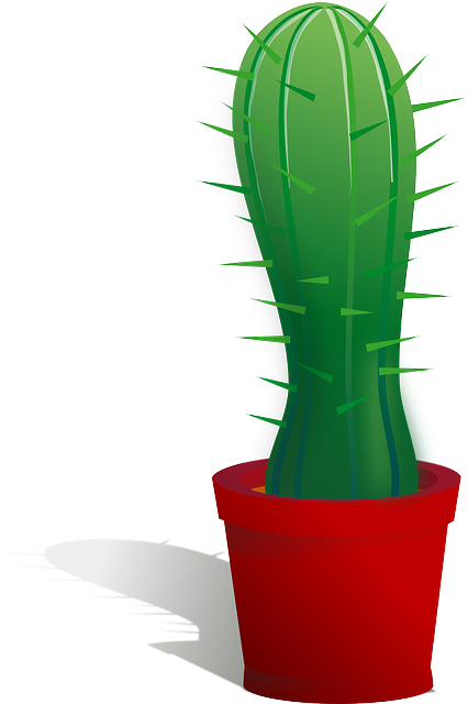 cactus, cacti, plant, thorns, spiky, flora, green