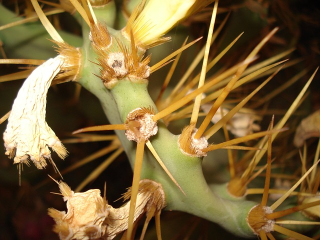 cactus, flower, arizona, plant, desert