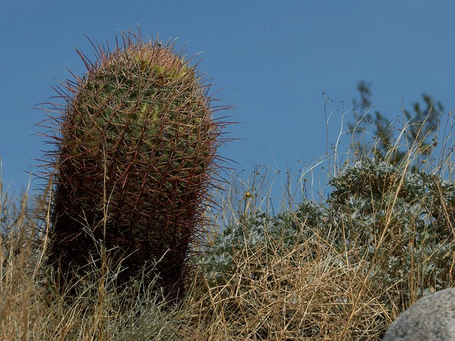 cactus, sting, large, plant, green, prickly, thorn
