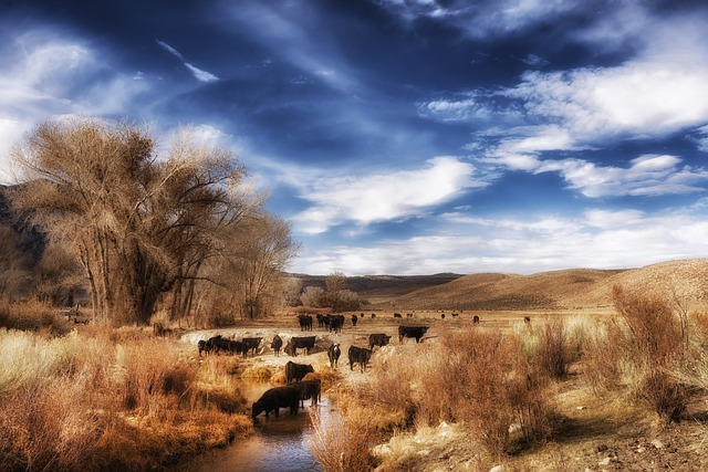 california, landscape, scenic, sky, clouds, cattle