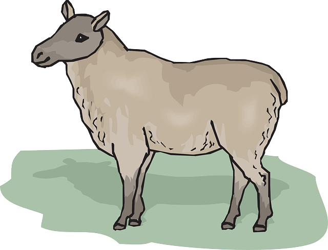 cartoon, art, standing, ewe, animal, fur