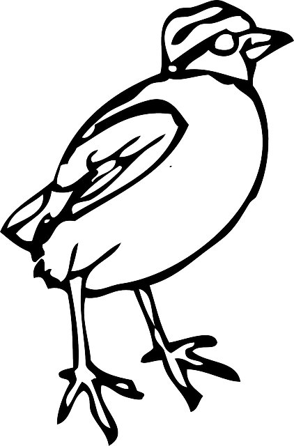 cartoon, little, birds, bird, stand, animal, standing
