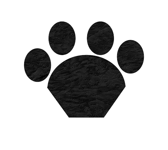 cat, black, print, foot, paw