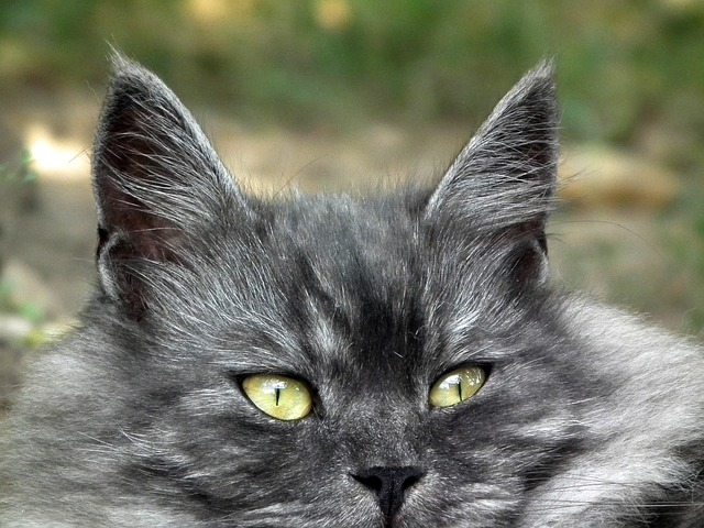 cat, cat's eye, cute, kitten, animals, grey, fluffy cat