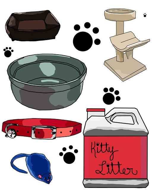 cat, kitten, bed, tree, kitty, litter, collar, bowl