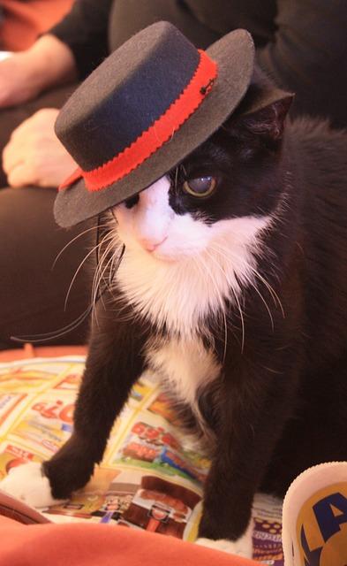 cat, pets, animal world, hat