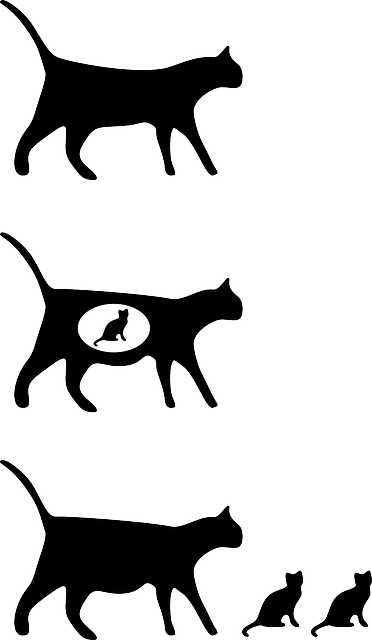 cat, sitting, pet, walking, animal, silhouettes, icon
