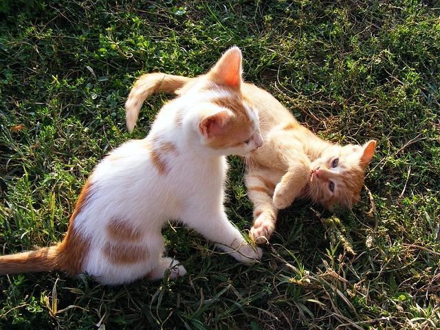 cats, funny, kittens, playing, animals
