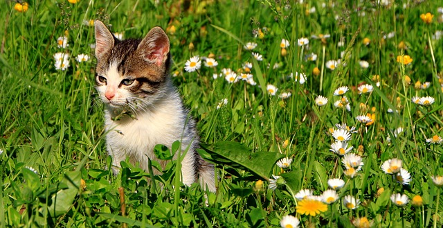 cats, garden, grass, green, kitty, animals