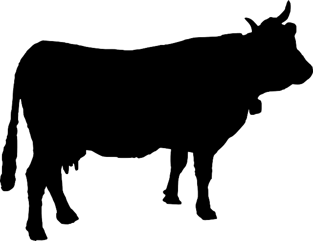 cattle, cow, cowbell, silhouette, animal, farm animal