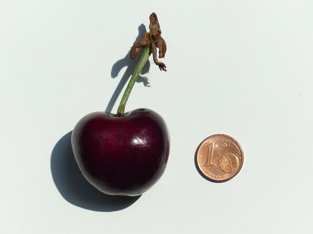 cherry, large, huge, size comparison, cent, penny, coin