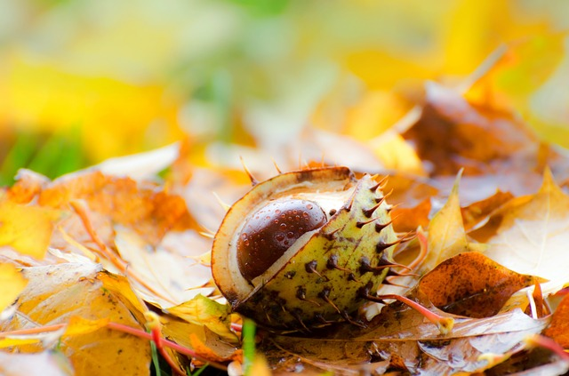 chestnut, leaf, leaves, background, grass, autumn