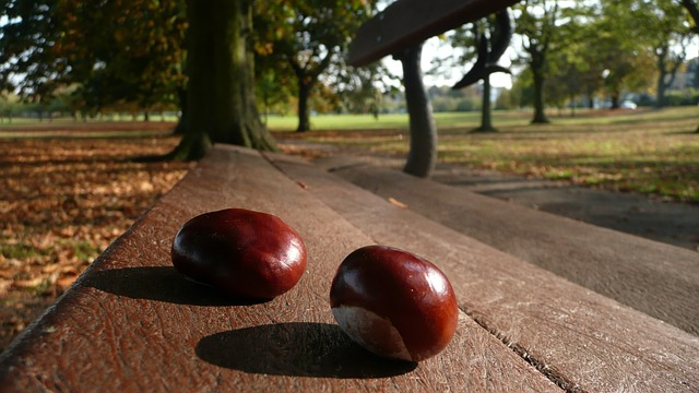 chestnuts, bench, two, seasons, background, tree, park