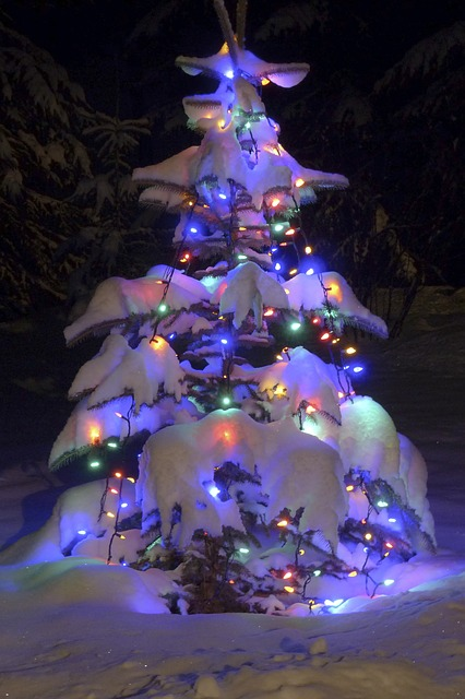 christmas tree, blue spruce, natural, snow covered