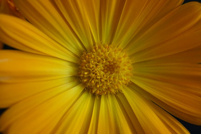 close, stamens, flower, yellow, yellow flower, marigold