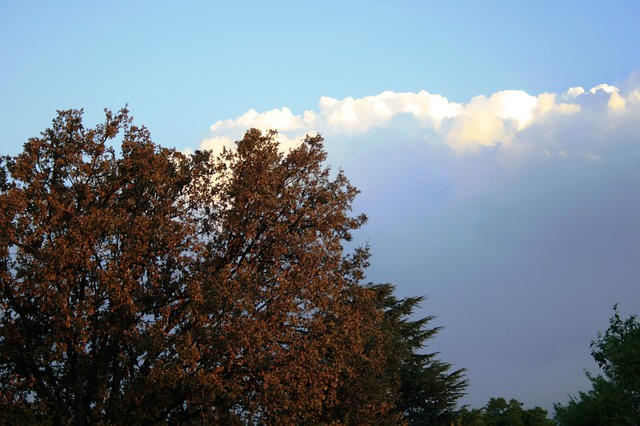 clouds, cumulus, white, large, heavy, shadowed