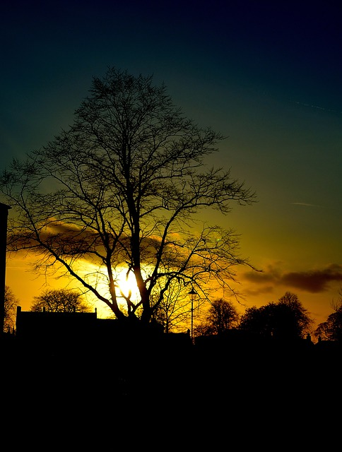 clouds, spring, trees, night, sky, tree, sunset, red