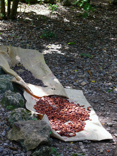 coffee, and, chocolate, nature, dominican, republic
