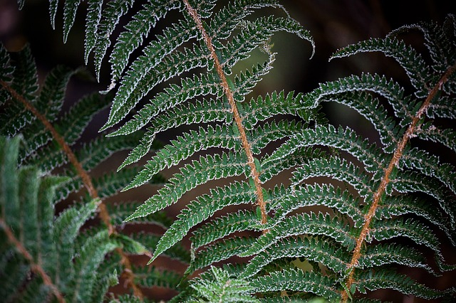 cold, fern, floral, forest, frost, green, ice, leaf