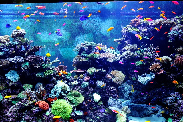 colorful aquarium, fish, fishes, tiny fish