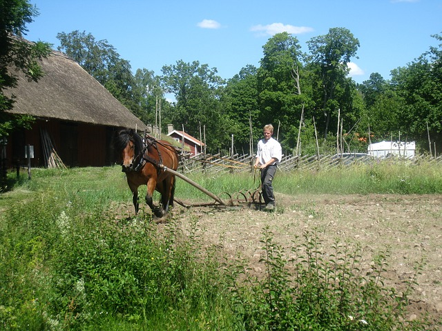 countryside, horse, man, plow, go, tree, house, summer
