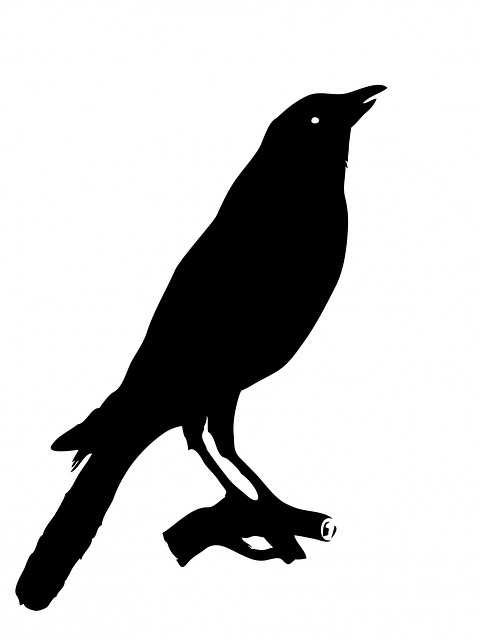 crow, bird, animal, black, silhouette, white