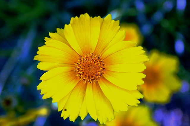 daisy, yellow, bright, flower, bloom, petals, delicate