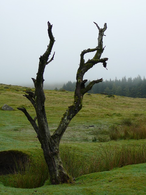 dartmoor, mystical, england, united kingdom, landscape