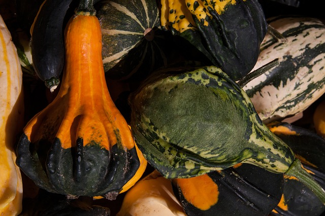 decorative squashes, cucurbita, cucurbitaceae, colorful