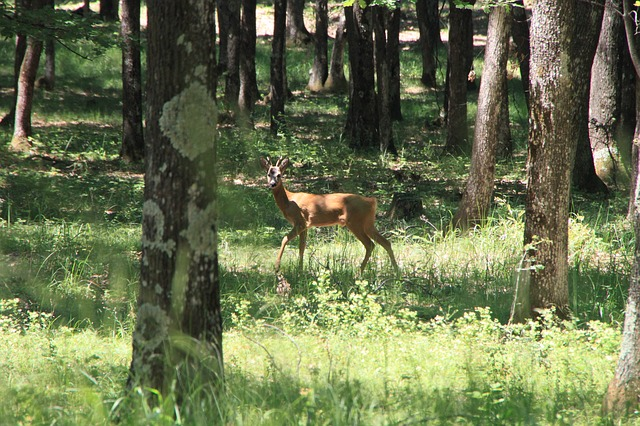 deer, forest, trees, wild, young, animals